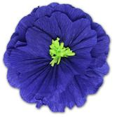 Cinco de Mayo Decorations Rachel's Royal Blue Flower Image
