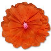 Flowers Rachel's Orange Flower Image