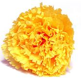 Day of the Dead Decorations Marigold Flower Image