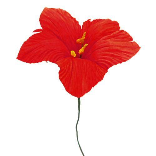 Small Cornhusk Lily Flower