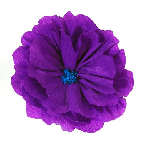 Rachel's Purple Flower