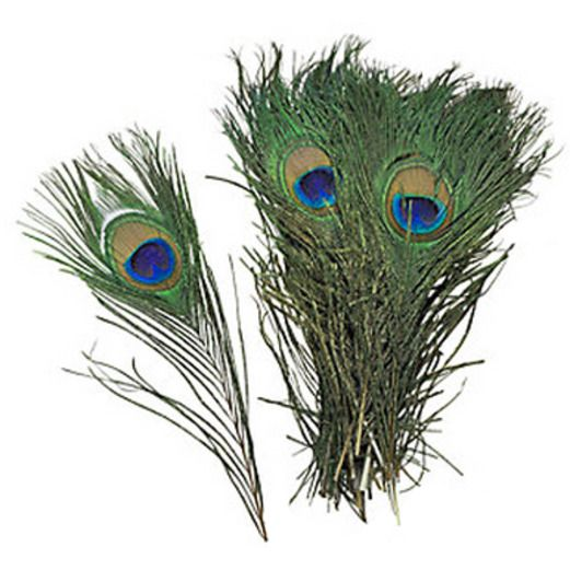 Natural Peacock Feathers Image