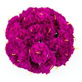 Cinco de Mayo Decorations Hot Pink Carnations Image