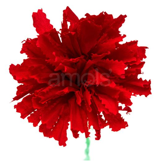 Day of the Dead Decorations Red Marigold Flower Image