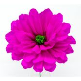 "Fiesta Decorations Solana's 8""Hot Pink Flower Image"