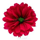 "Solana's 8"" Red Flower Image"
