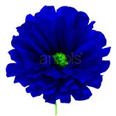 "Solana's 8"" Royal Blue Flower Image"