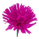 Fiesta Decorations Hot Pink Marigold Image