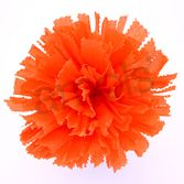 Day of the Dead Decorations Large Orange Marigold Image