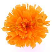 Day of the Dead Decorations Large Golden Yellow Marigold Image